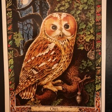 The Owl card from the Druid Animal Oracle deck